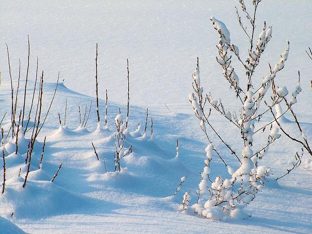 winter-234721_640